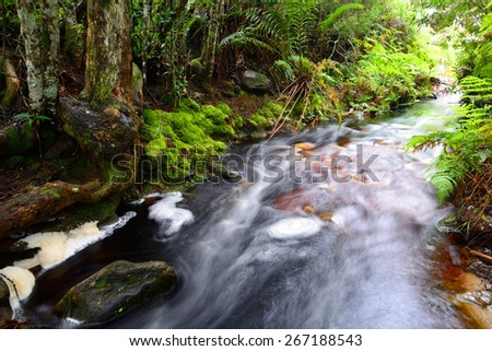 Stream running through indigenous forest  - South Africa - stock photo