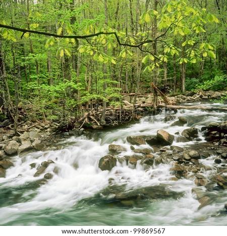 Stream rushes through forest in Smokey Mountains - stock photo