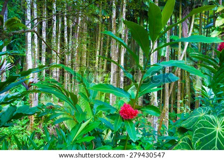 Stream through a tropical rainforest - stock photo