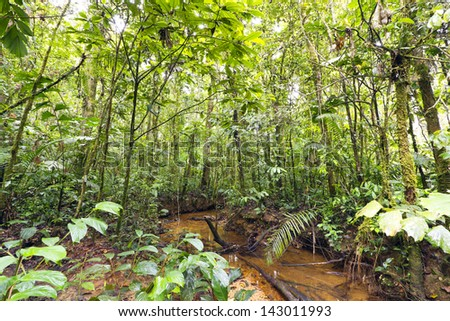 Stream winding through lowland tropical rainforest in the Ecuadorian Amazon - stock photo
