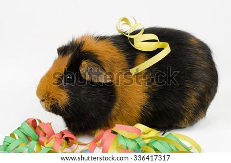 streamer pig - stock photo