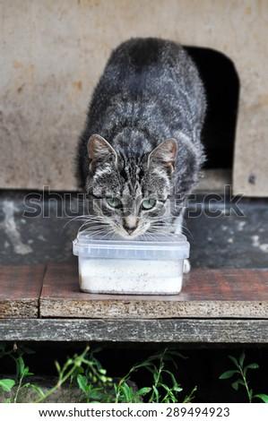 Street Cat Drinking Milk Outdoors - stock photo