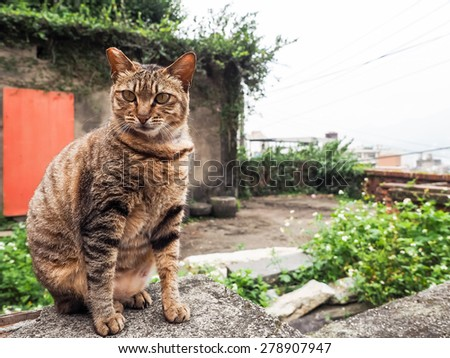 street cat in Tamsui - stock photo
