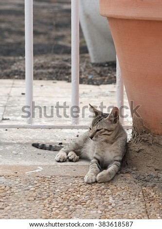 Street cat. Relaxing cat, cat resting in a shadow, sleeping cat in the street on sunny day, lazy cat in the street, lazy cat on day time, animal, domestic cat, street cat, cat in the street - stock photo