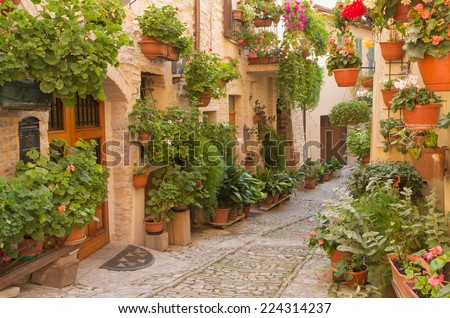 Street decorated with plants and flowers in the historic Italian city. (Spello, Umbria, Italy.) Horizontally. - stock photo