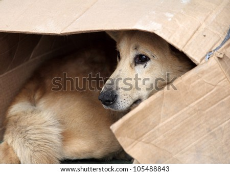 Street dog - stock photo