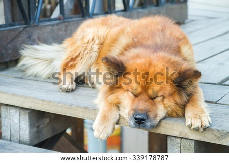 Street dog on Alegre districts of the protected UNESCO World Heritage Site of Valparaiso, Chile - stock photo