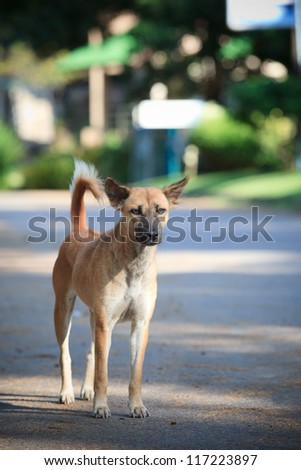 street dog standing on soil ground - stock photo