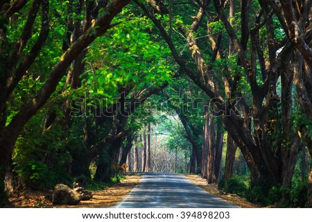 Street in covered with arched tree branches