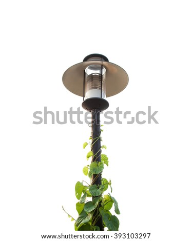 Street Lighting and Vine isolated background, Selective Focus. - stock photo
