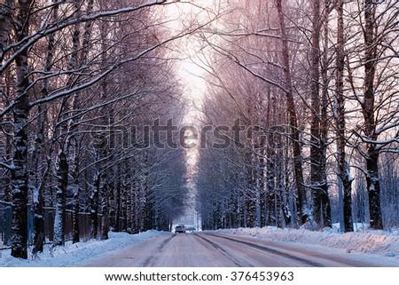street trees winter empty - stock photo