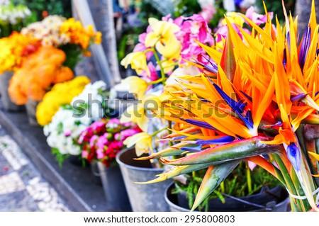 Strelitzia Reginae flowers closeup (bird of paradise flower). Flower market at Madeira island - stock photo