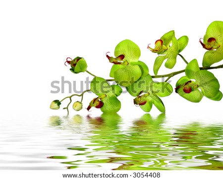 Striking Green Orchid - stock photo