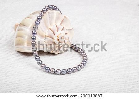 String of Black Pearl Necklace Over a Lightning Whelk Seashell - stock photo