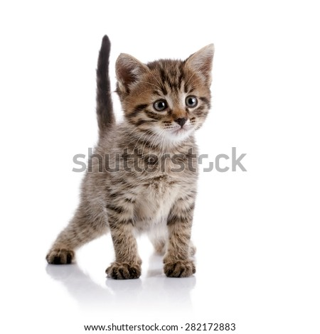 Striped amusing domestic kitten on a white background. - stock photo
