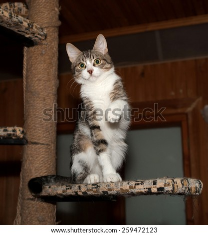 Striped and white little kitten sitting on scratching posts - stock photo