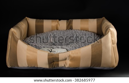 striped bed and soft mattress for cats - stock photo