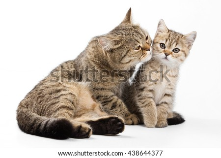 Striped cat and kitten (isolated on white) - stock photo