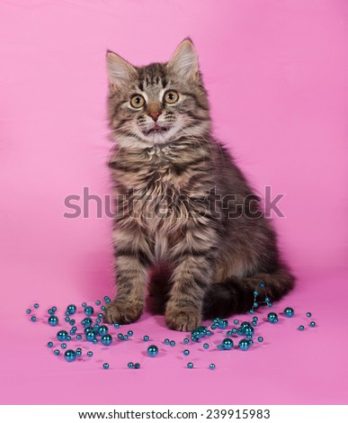 Striped fluffy kitten with Christmas beads sits on pink background - stock photo