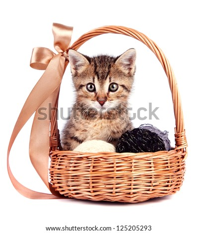 Striped kitten in a basket with woolen balls on a white background - stock photo