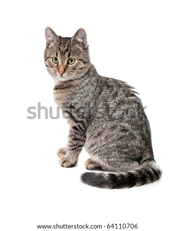 Striped kitten with white speck - stock photo