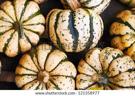Striped pumpkins background, white and green - stock photo