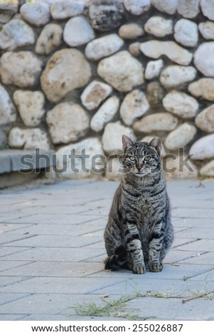 Striped Stray cat sitting on the ground - stock photo