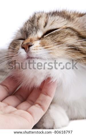 Stroking the cat - stock photo