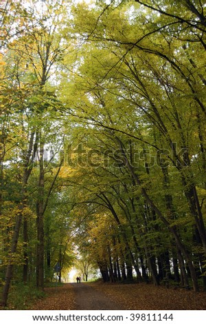 Stroller in the fall forest at rain - stock photo