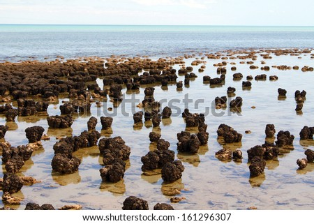 Stromatolites in west australia - stock photo