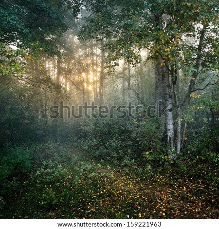 Strong beautiful fog and sunbeams in the forest - stock photo