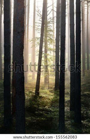 Strong beautiful fog in the forest - stock photo