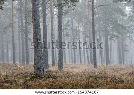 Strong morning fog in the forest - stock photo