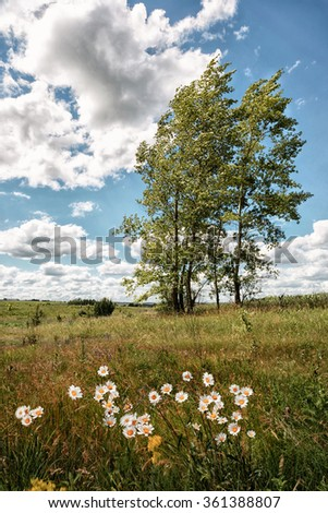 Strong wind drives the clouds, tilting trees, fast shakes daisies, the sun shines brightly - stock photo