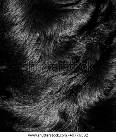 Structure of fur of a dog of breed a Rottweiler - stock photo