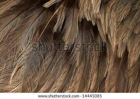 Structure of plumage of ostrich - stock photo