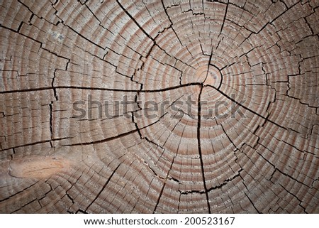 structure of the saw cut logs in the background - stock photo
