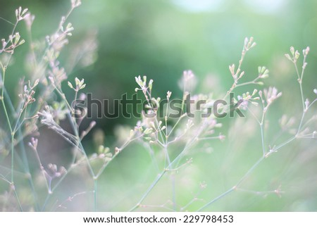Structures of flowering grass soft blur.The background for the creation of ideas. - stock photo