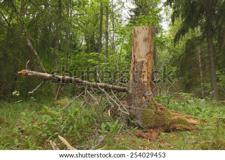 Stub in forest - stock photo