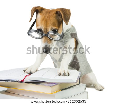 Student pupil dog and a lot of books. Study and teaching.  Strictly looking from under glasses. Working hard - stock photo