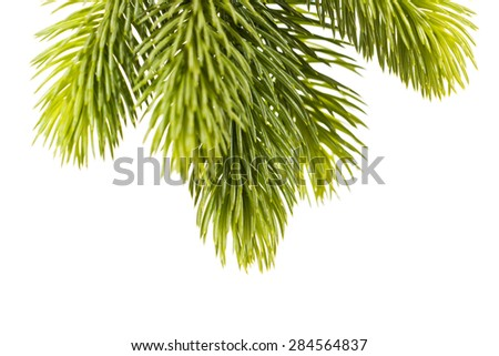 Studio closeup of a fresh fir twig, isolated on white background. - stock photo