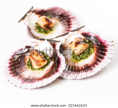 Studio closeup of seared scallops, garnished with pea shoots and served on a bed of green and purple curly lettuces, presented on a scallop shell. - stock photo