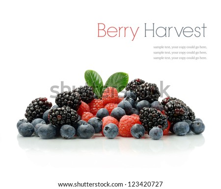 Studio image of a fresh harvest of seasonal berries against a white background with soft shadows. Copy space. - stock photo