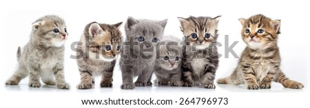 studio isolated portrait of large group of kittens against white background - stock photo