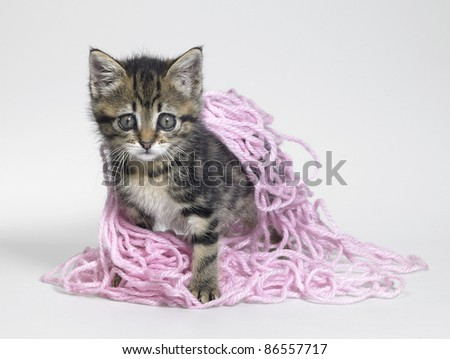 Studio photography of a kitten playing and coated with pink wool - stock photo