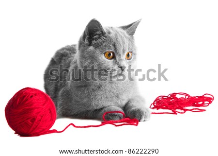 Studio portrait of cute young British blue kitten playing with red ball of threads - stock photo