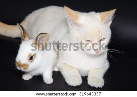 Studio portrait of two puppies: kitten and bunny isolated on black background. - stock photo