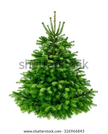 Studio shot of a fresh gorgeous fir tree in lush green for Christmas, without ornaments, isolated on pure white - stock photo