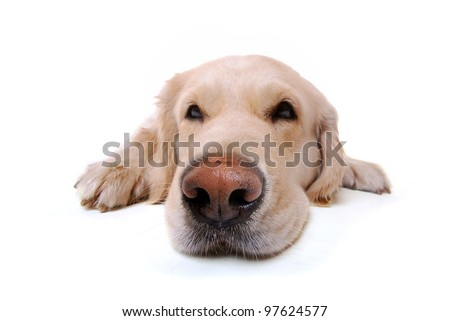 Lazy Dog Stock Photos, Illustrations, and Vector Art