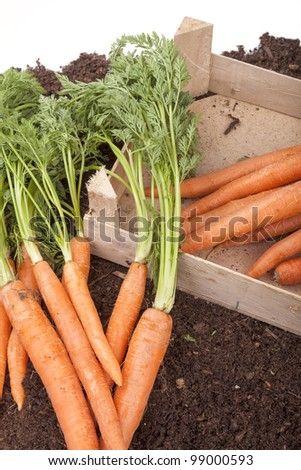 studio-shot of fresh picked carrots on a  field, in a wooden basket, isolated on white - stock photo
